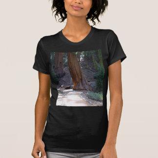 Seqoias Trees Trails T-shirts