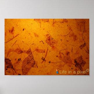 seque el fondo de las hojas impresiones