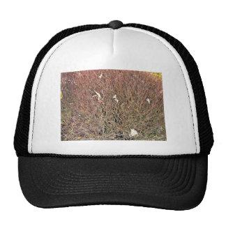 Seque las hojas en campo de hierba seca gorros