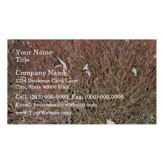 Seque las hojas en campo de hierba seca tarjeta de negocio