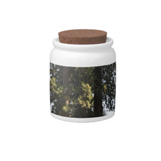 Sequioa National Park Candy Jars