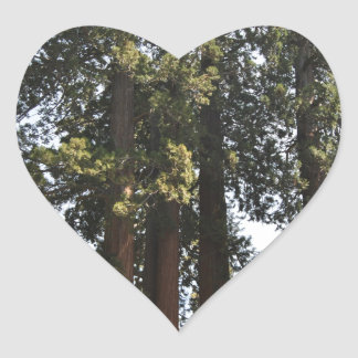 Sequioa National Park Heart Sticker