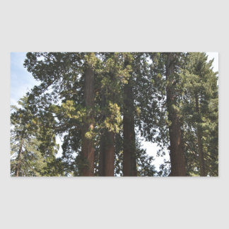Sequioa National Park Rectangular Sticker