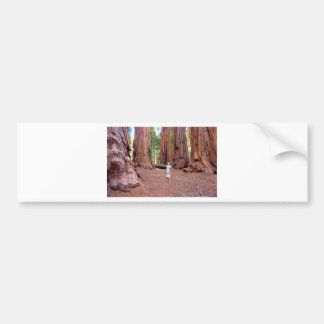 Sequioa Trees Bumper Sticker