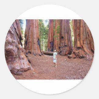 Sequioa Trees Classic Round Sticker