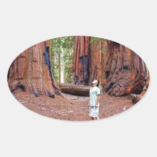 Sequioa Trees Oval Sticker