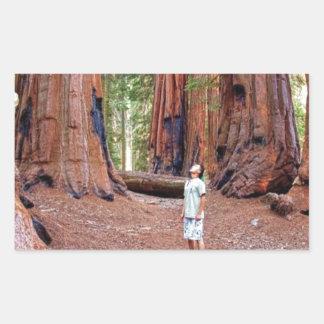 Sequioa Trees Rectangular Sticker