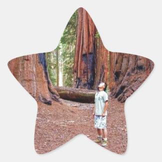 Sequioa Trees Star Sticker