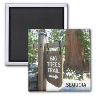 Sequoia Big Trees Trail Magnet! Magnet