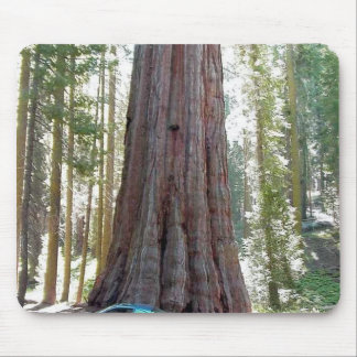 Sequoia Car Tree Mouse Pad