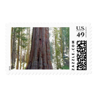 Sequoia Car Tree Stamps