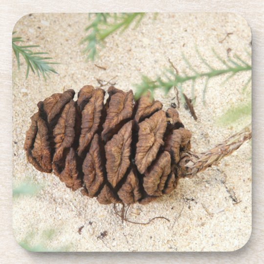 Sequoia Cone Cork Coasters