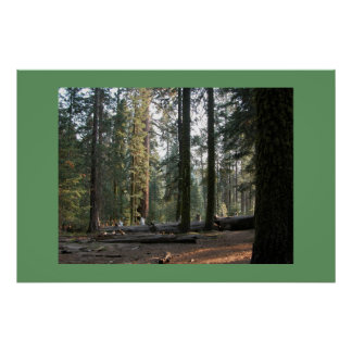 Sequoia Forest Poster