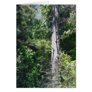 Sequoia Forests Greeting Card