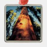 Sequoia National Park , California 3 Christmas Ornaments
