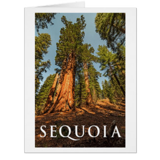 SEQUOIA National Park, California Card