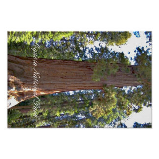 Sequoia National Park California Poster