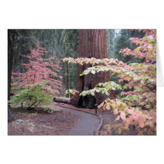 Sequoia national park greeting card
