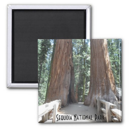Sequoia National Park Refrigerator Magnets