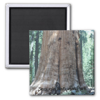 Sequoia National Park Fridge Magnets