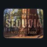 "Sequoia National Park Magnet<br><div class=""desc"">Features photograph of a giant Sequoia tree in California&#39;s Sequoia National Park.</div>"