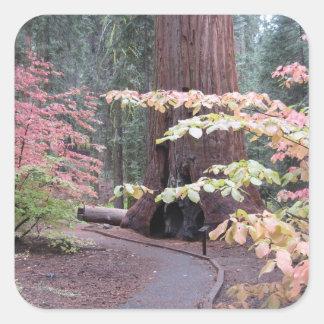 Sequoia national park square sticker