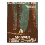 Sequoia National Park Vintage Travel Poster Postcard