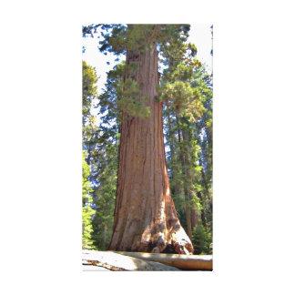 Sequoia National Park Wrapped Canvas Canvas Prints