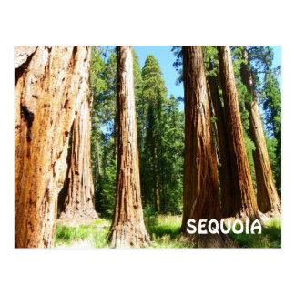 Sequoia Postcard! Postcard