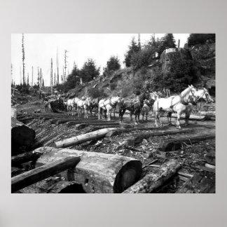 SEQUOIA SKID ROAD 1893 POSTER