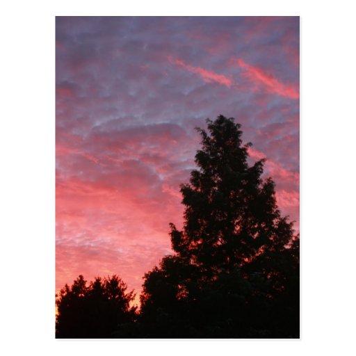 Sequoia Sunrise Post Cards
