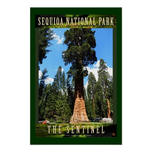 Sequoia The Sentinel-Poster Poster