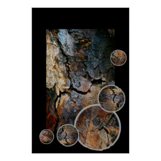 SEQUOIA TREE BARK DETAIL COMPOSITION POSTER