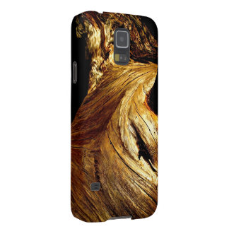 SEQUOIA TREE DETAIL IN SUNSET LIGHT GALAXY S5 COVERS