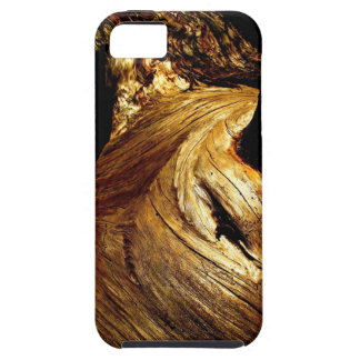 SEQUOIA TREE DETAIL IN SUNSET LIGHT iPhone SE/5/5s CASE