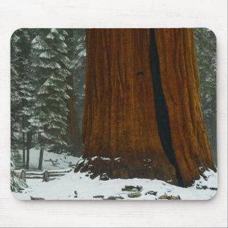 Sequoia Tree in Winter Mousepad