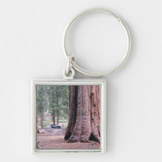 Sequoia  Tree King Keychain