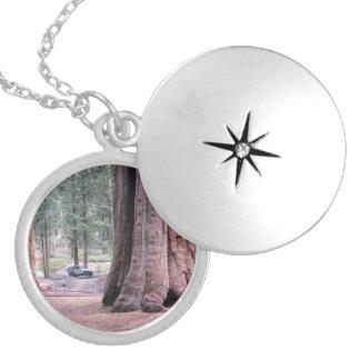 Sequoia  Tree King Round Locket Necklace