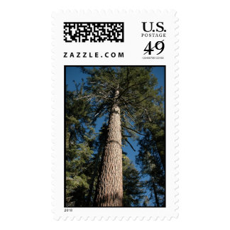 Sequoia Tree Postage