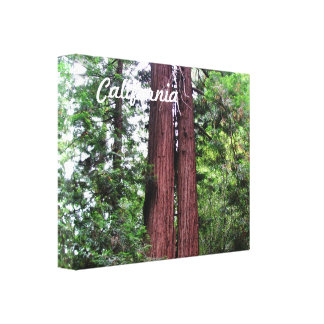Sequoias Stretched Canvas Print