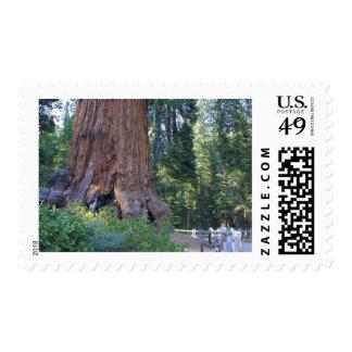 Sequoias Forrests Bark Fences Postage Stamp