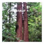 Sequoias Invitation