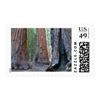 Sequoias Tree Forests Stamp
