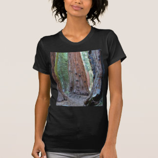 Sequoias Tree Forests T Shirt