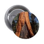 Sequoias Trees Giants Burned Bark Pinback Button