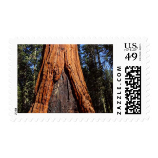 Sequoias Trees Giants Burned Bark Postage Stamps