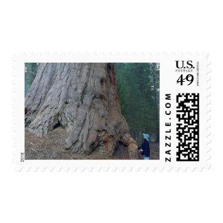 Sequoias Trees Giants Stamp