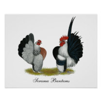 Serama Bantams Poster