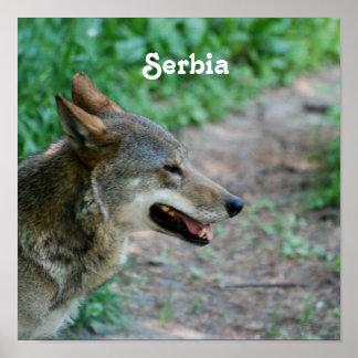 Serbia Wolf Print