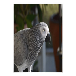 Serene African Grey Parrot Magnetic Card